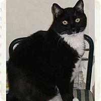 Adopt A Pet :: Clayton - Catasauqua, PA
