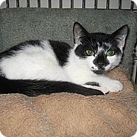Adopt A Pet :: Isabella - Portland, ME
