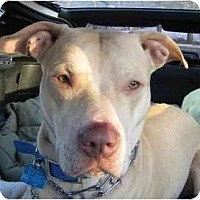 Adopt A Pet :: Hayden - Forest Hills, NY