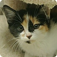 Adopt A Pet :: Fancy - white settlment, TX