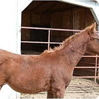 Adopt A Pet :: BamBam - Pueblo, CO