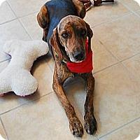Adopt A Pet :: Savannah - Leesburg, VA