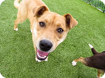 Chow Chow Mix Dog for adoption in Meridian, Idaho - Hooch