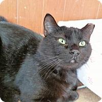 Adopt A Pet :: Mr Meowt - Berlin, MD