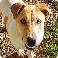 Adopt A Pet :: Yoda - Kingston, TN