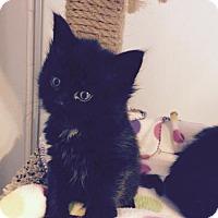 Adopt A Pet :: Fuzzy - Denver, CO