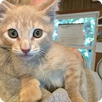 Adopt A Pet :: Douglas-adoption pending - Hanna City, IL