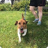 Adopt A Pet :: Slim - Orleans, VT