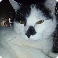 Adopt A Pet :: Sesh - Hamburg, NY