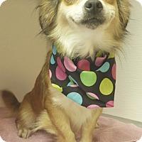 Adopt A Pet :: Lulu - Manning, SC