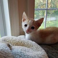 Adopt A Pet :: Jack - Knoxville, TN