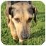 Photo 3 - Catahoula Leopard Dog/Hound (Unknown Type) Mix Dog for adoption in Miami, Florida - Lexi