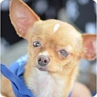 Adopt A Pet :: Frappe - Madison, WI