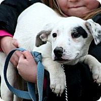 Adopt A Pet :: Blanche - Spring City, PA