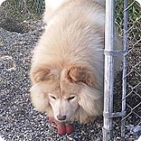 Adopt A Pet :: Lilo - Holland, MI