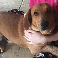 Adopt A Pet :: Tyler - Kilgore, TX