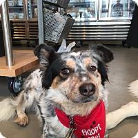 Adopt A Pet :: Jasper- i want a dog buddy! - Redondo Beach, CA