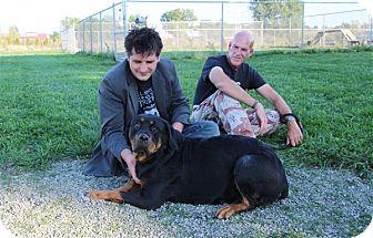 Rottweiler Dog for adoption in Elyria, Ohio - Emma