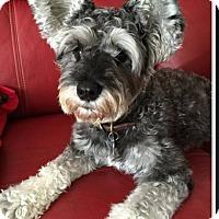 Adopt A Pet :: Kambo - Cerritos, CA