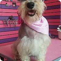 Adopt A Pet :: Jessy - San Diego, CA
