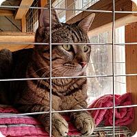 Adopt A Pet :: Tigger - Wakinsville, GA