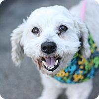 Adopt A Pet :: Jacques - Canoga Park, CA