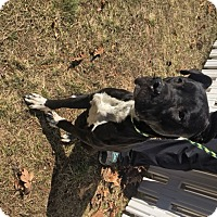 Adopt A Pet :: Cruiser - Muskegon, MI