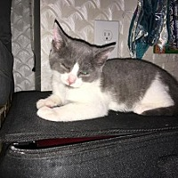 Adopt A Pet :: Linda Barba - Philadelphia, PA
