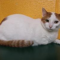 Adopt A Pet :: Kat - Williamsport, PA
