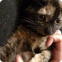 Adopt A Pet :: Dina - Toms River, NJ