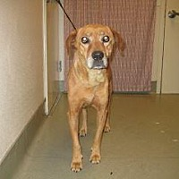 Adopt A Pet :: 361505 LF - Wildomar, CA