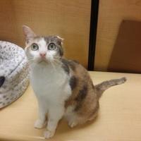 Adopt A Pet :: Giselle - Blackwood, NJ