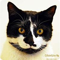 Adopt A Pet :: Edie - Encinitas, CA