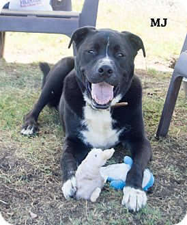 Labrador Retriever Mix Dog for adoption in Patterson, California - MJ