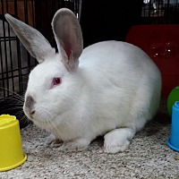 Rex Mix for adoption in Williston, Florida - Laurel