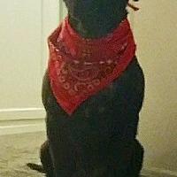 Adopt A Pet :: Charley Bean - Long Beach, CA
