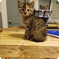 Adopt A Pet :: Ariana - Chicago, IL