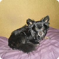 Adopt A Pet :: Taco - North Jackson, OH