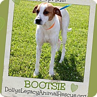 Adopt A Pet :: BOOTSIE - Lincoln, NE
