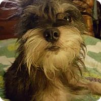 Adopt A Pet :: Toto - Pensacola, FL