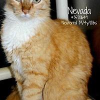 Adopt A Pet :: Nevada - Waggaman, LA