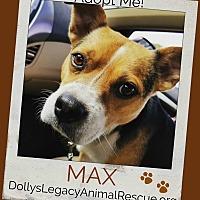 Adopt A Pet :: MAX - Lincoln, NE