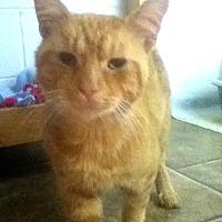 Adopt A Pet :: Max - Shippenville, PA