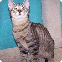 Adopt A Pet :: K-Park2-Mack - Colorado Springs, CO