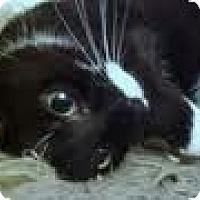 Adopt A Pet :: Rosie - Lancaster, MA