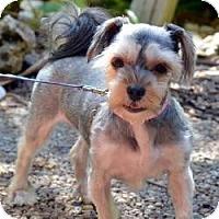 Adopt A Pet :: Maddie - Fairfax, VA
