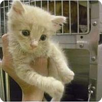 Adopt A Pet :: Patrick STAR - Mobile, AL