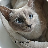 Adopt A Pet :: Chynna - Bentonville, AR