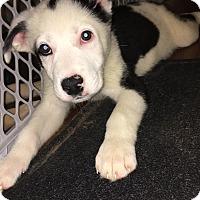 Adopt A Pet :: RHODES AND RANGER - Nashville, TN