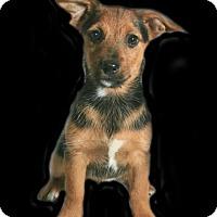 Adopt A Pet :: Meeko - Lufkin, TX